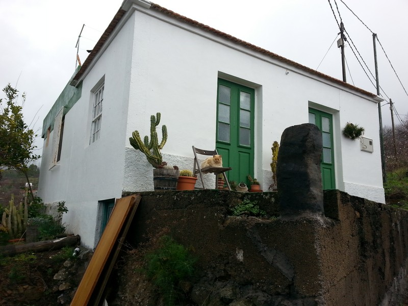 Katze bei Puntagorda - La Palma